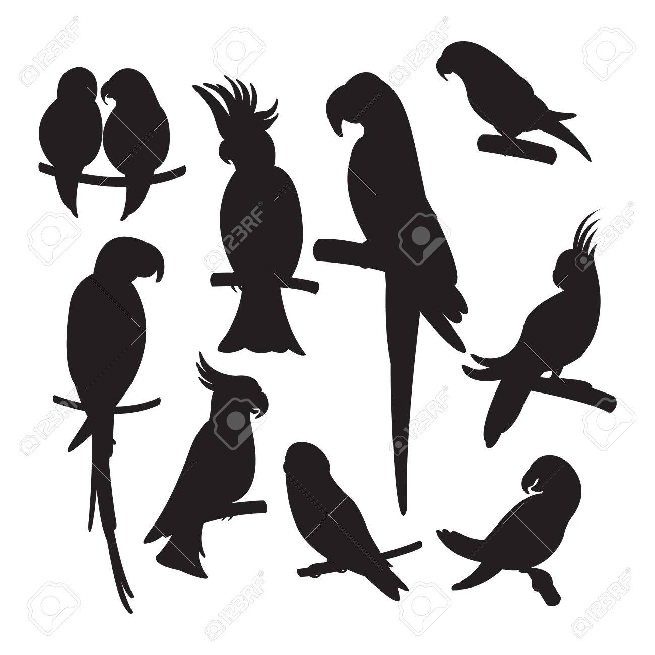 Cartoon parrots set and parrots wild animal birds. Tropical parrots feather zoo birds, tropical fauna macaw flying ara. Various cartoon exotic birds set with parrots vector illustration. - 62781426