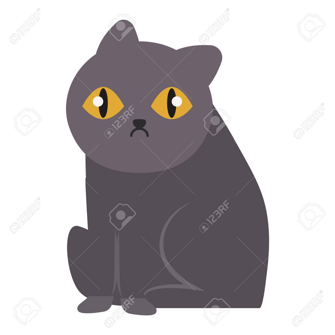 noir chatte