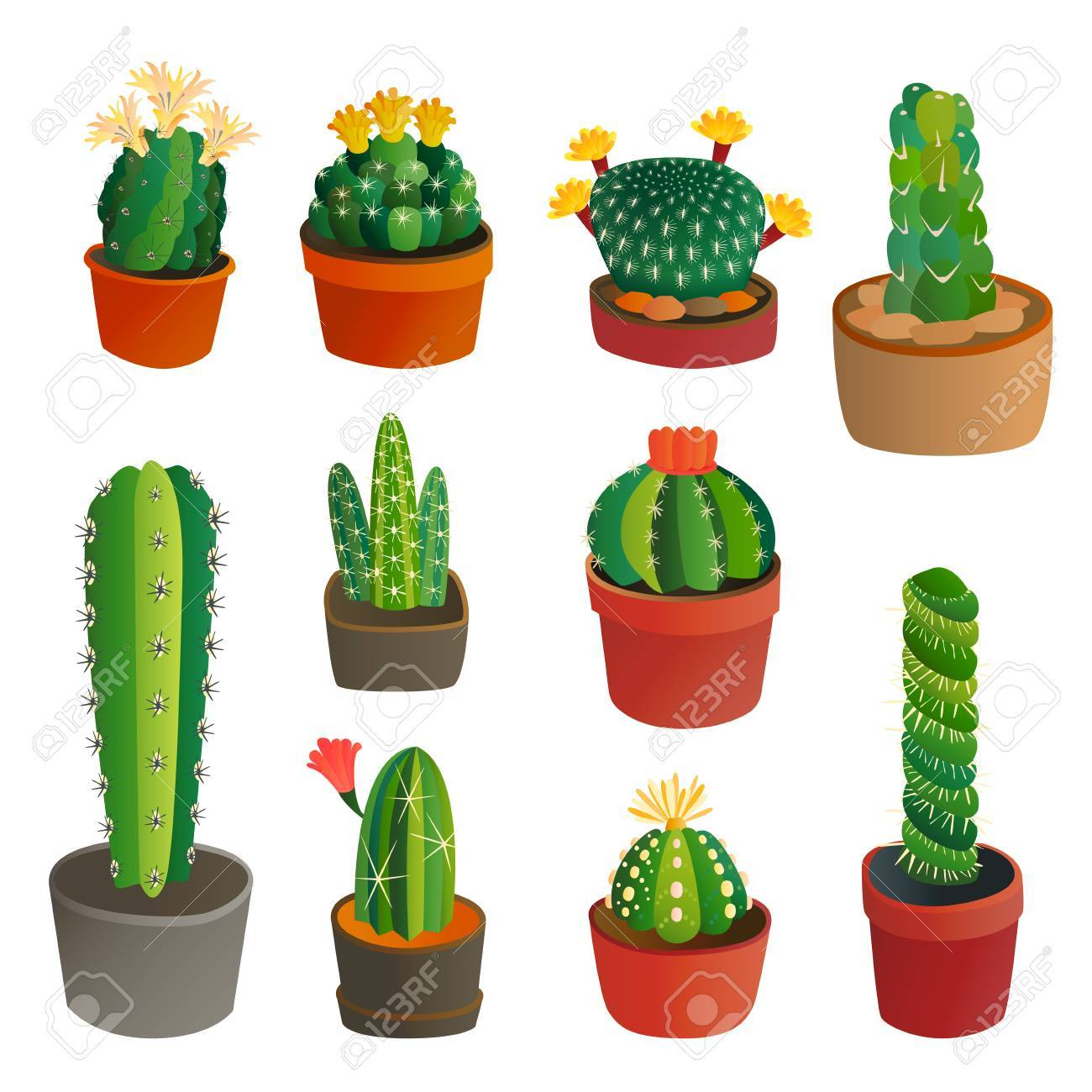 Cactus flat style nature desert flower green cartoon drawing graphic mexican succulent and tropical plant garden