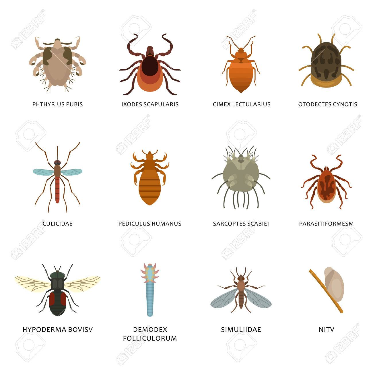 parásito del insecto de agua
