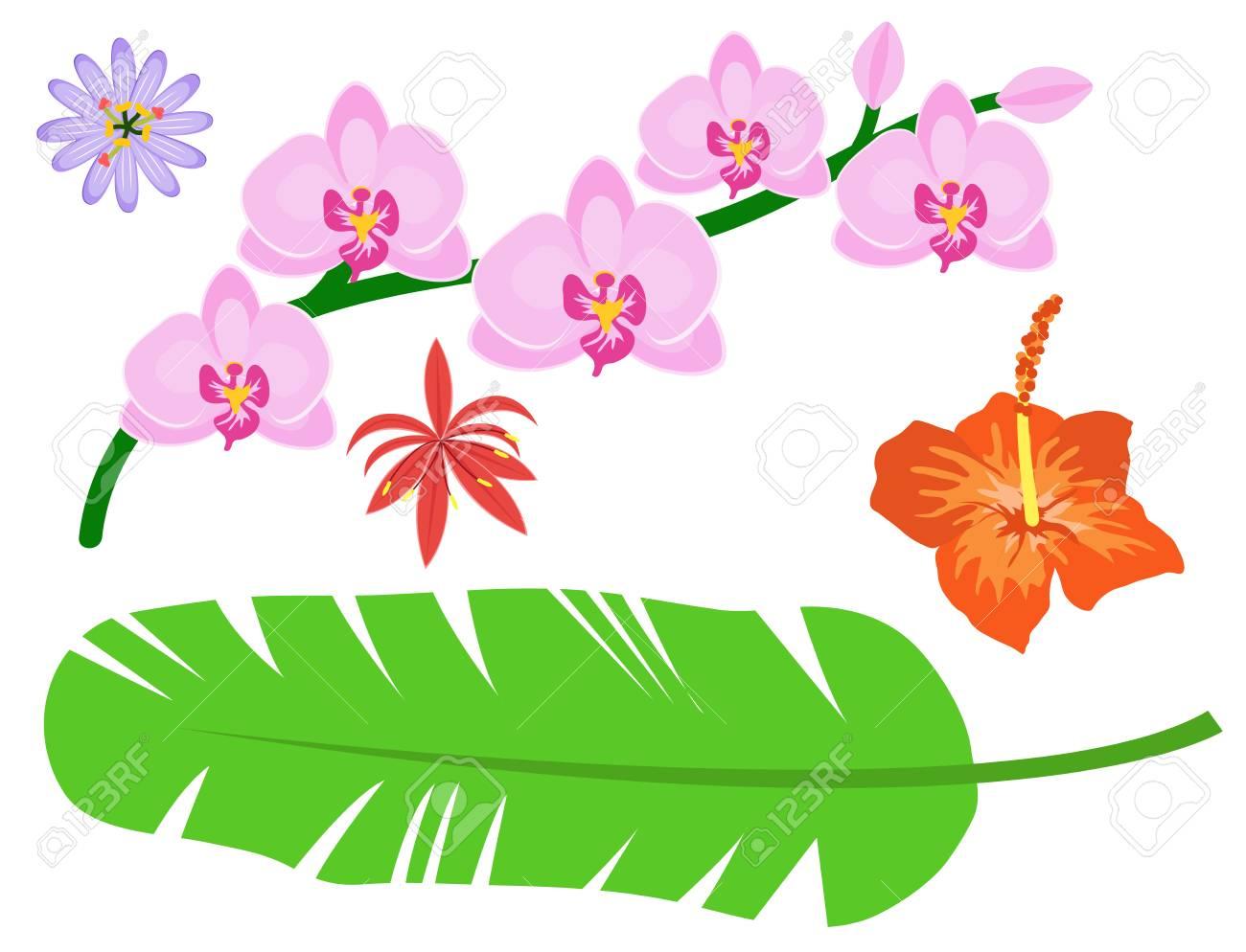 Hermoso Conjunto De Flores Tropicales Diseno De Plantas De Verano