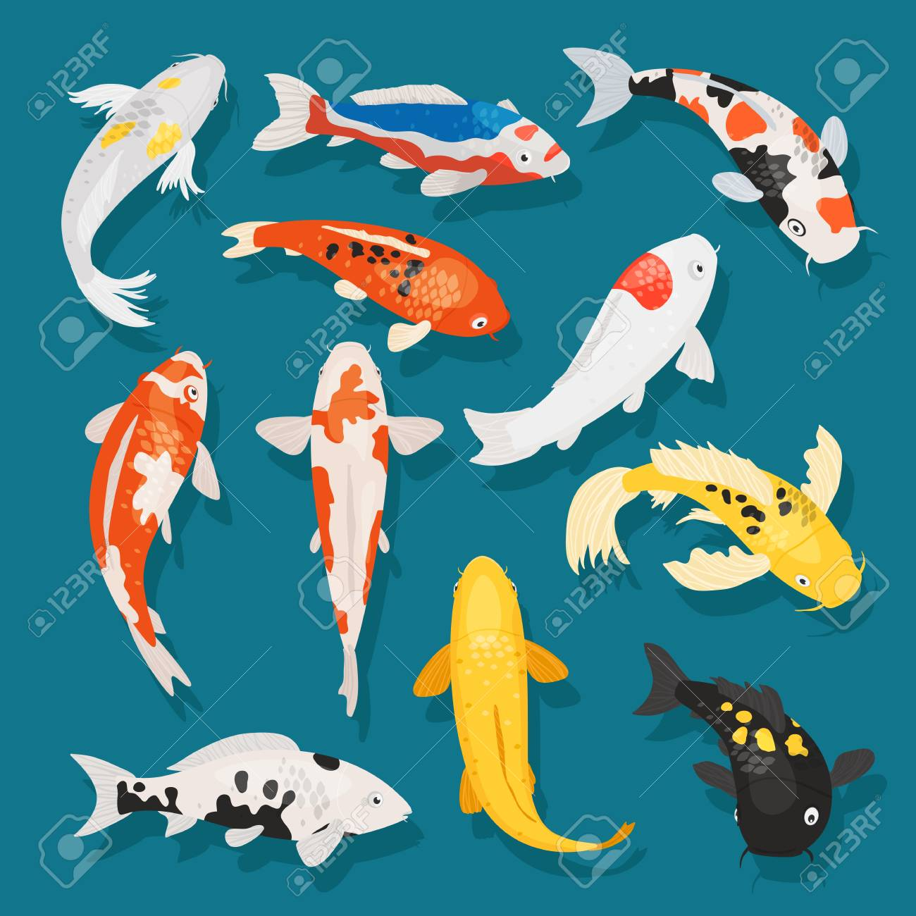 Japanese fish vector illustration carp and colorful oriental koi in Asia set of Chinese goldfish and traditional fishery isolated background - 98753308