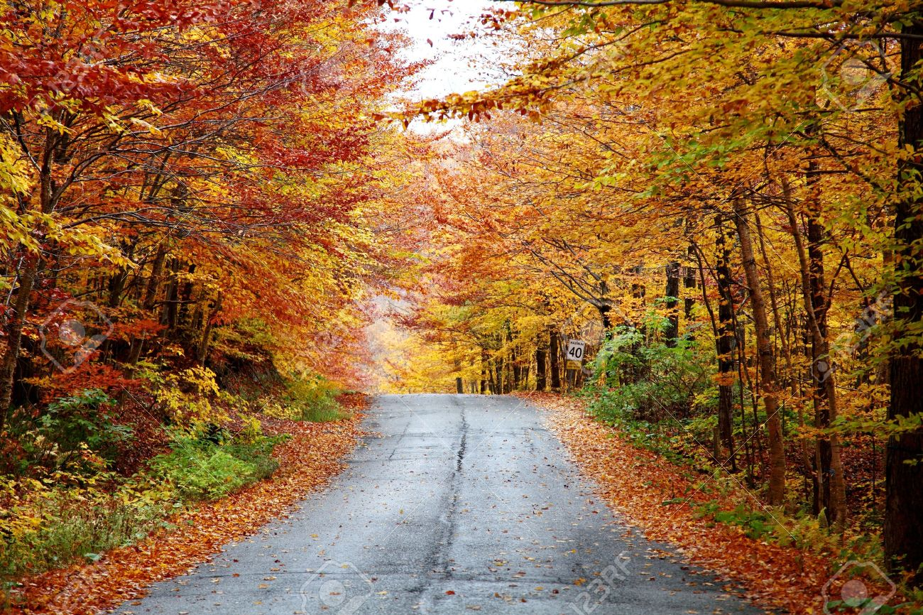 Rainy autumn afternoon on a country road located in Quebec, Canada. - 11963496