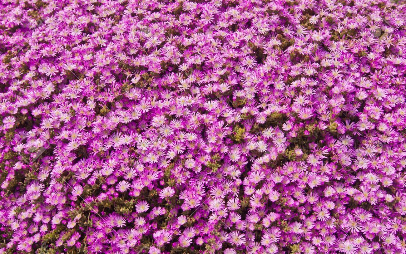 Tappeto di fiori rosa