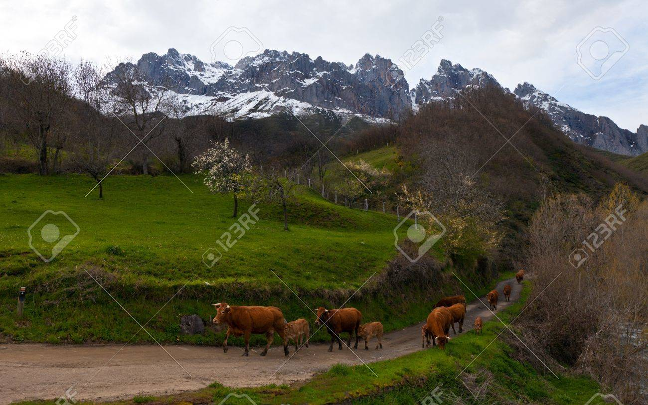 beautiful landscape with mountains and a herd of cows in the spring Stock Photo - 13910074