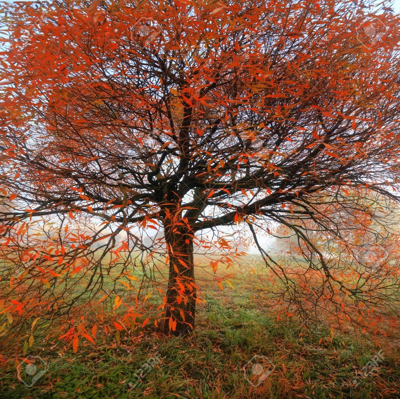 autumn Stock Photo - 16927603
