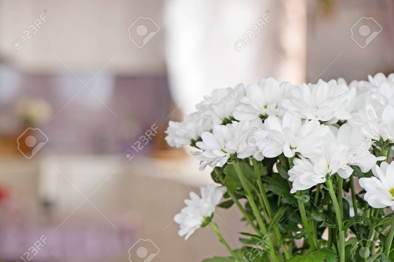 Bouquet of white chrysanthemums close-up on a blurred background inside the home environment. Copy space - 135413920