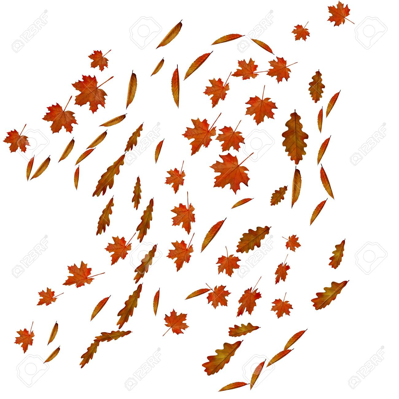 Falling autumn maple, cherry and oak leaves. - 130400274