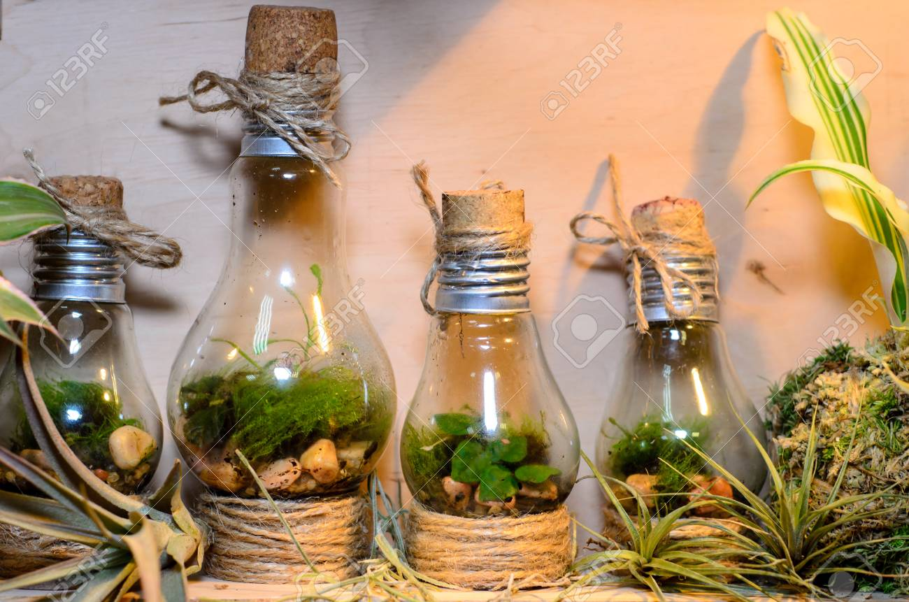 Little Light Bulb Terrariums Stock Photo Picture And Royalty Free