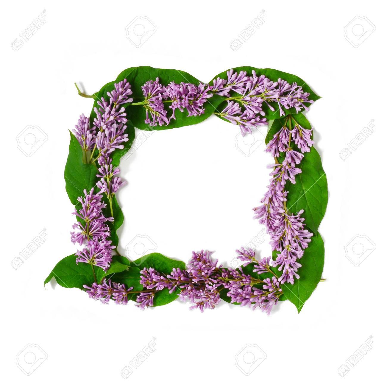 Lila Blüten Auf Weißem Hintergrund. Wohnung Lag Blumen Quadratischen ...
