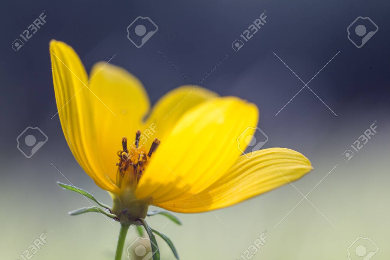 Small Yellow Flower With Textured Petals With A Gap Showing The