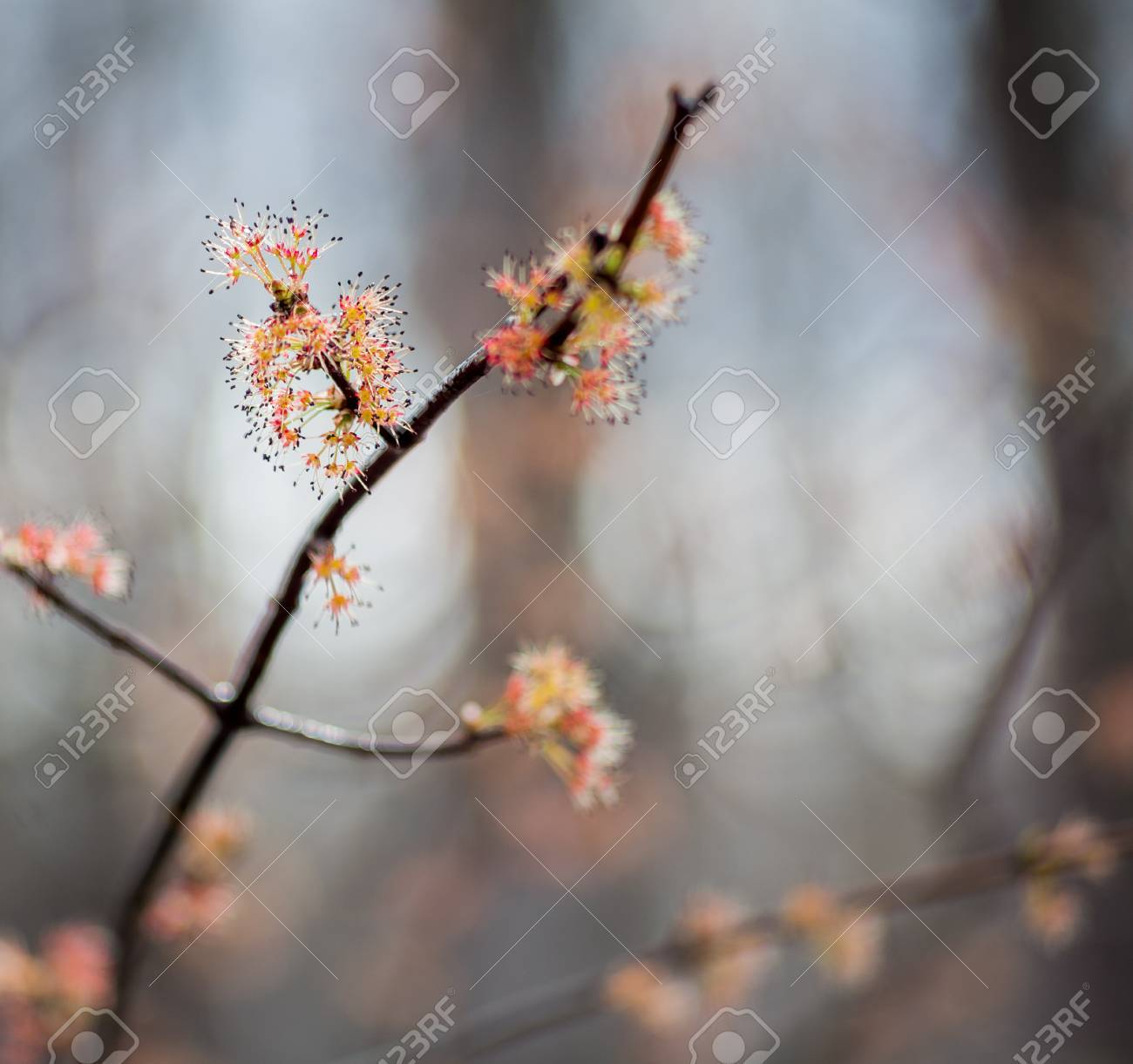 Clusters Of Pink And Orange Flowers With Black Stamen On A Tree