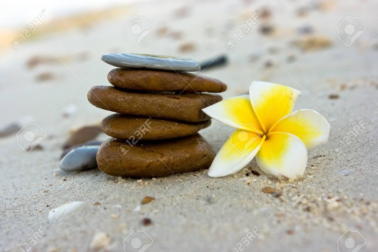 Temple tree flowers lying on the beach Stock Photo - 4483485