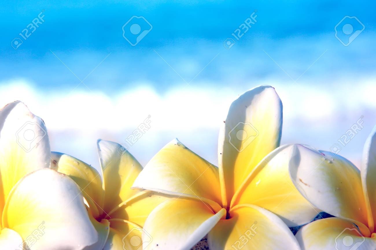 Temple tree flowers on the summer beach Stock Photo - 4483324