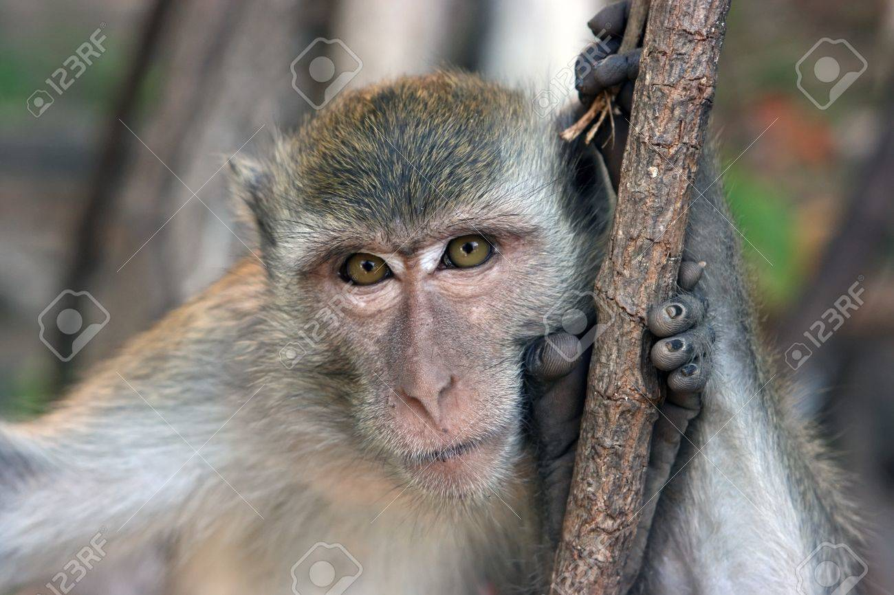 New Species of Monkey, Lesula, Discovered in Africa | The Mary Sue