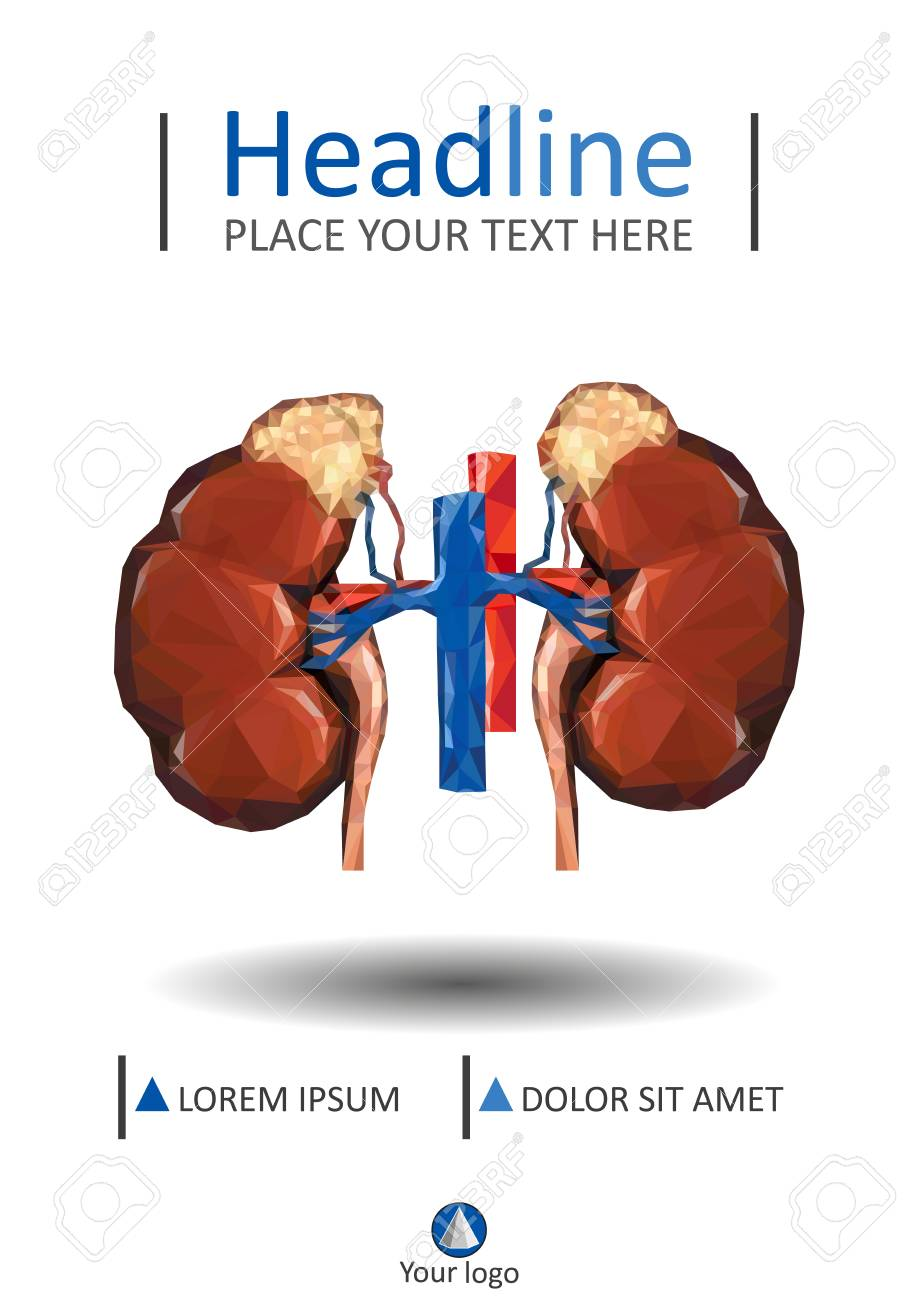 Medical Cover Template With Human Low Poly Kidneys With Vein ...