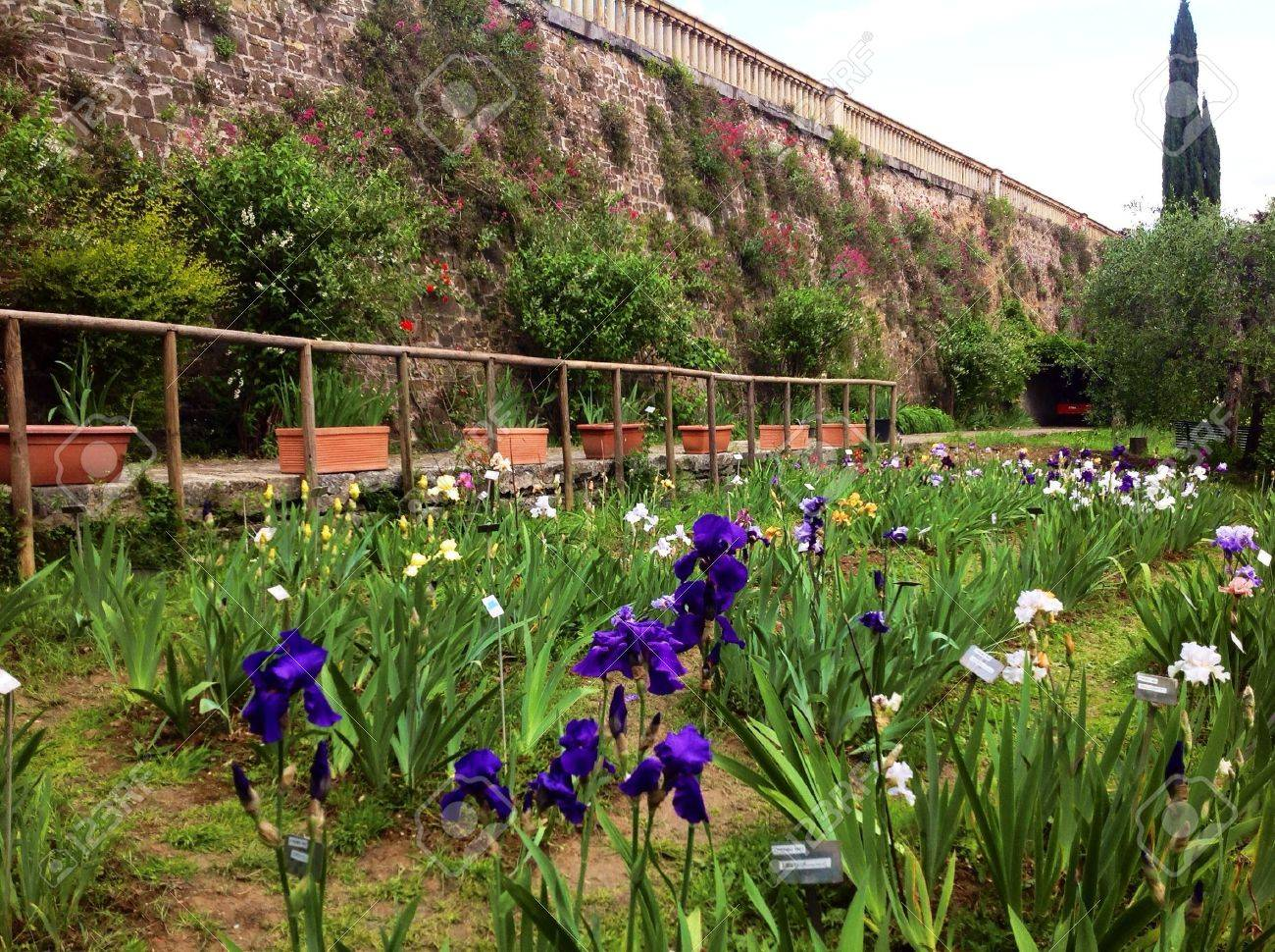 Iris Garden In Florence, Italy Stock Photo   28714616