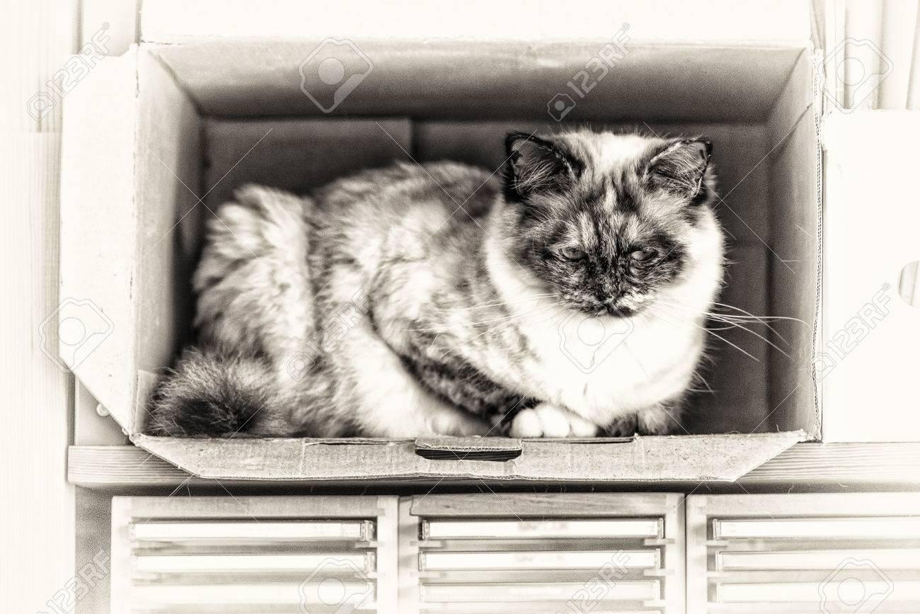 noir et blanc chatte photos