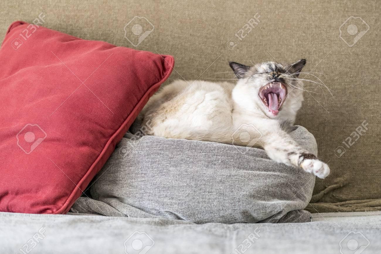 gros béant chatte photos