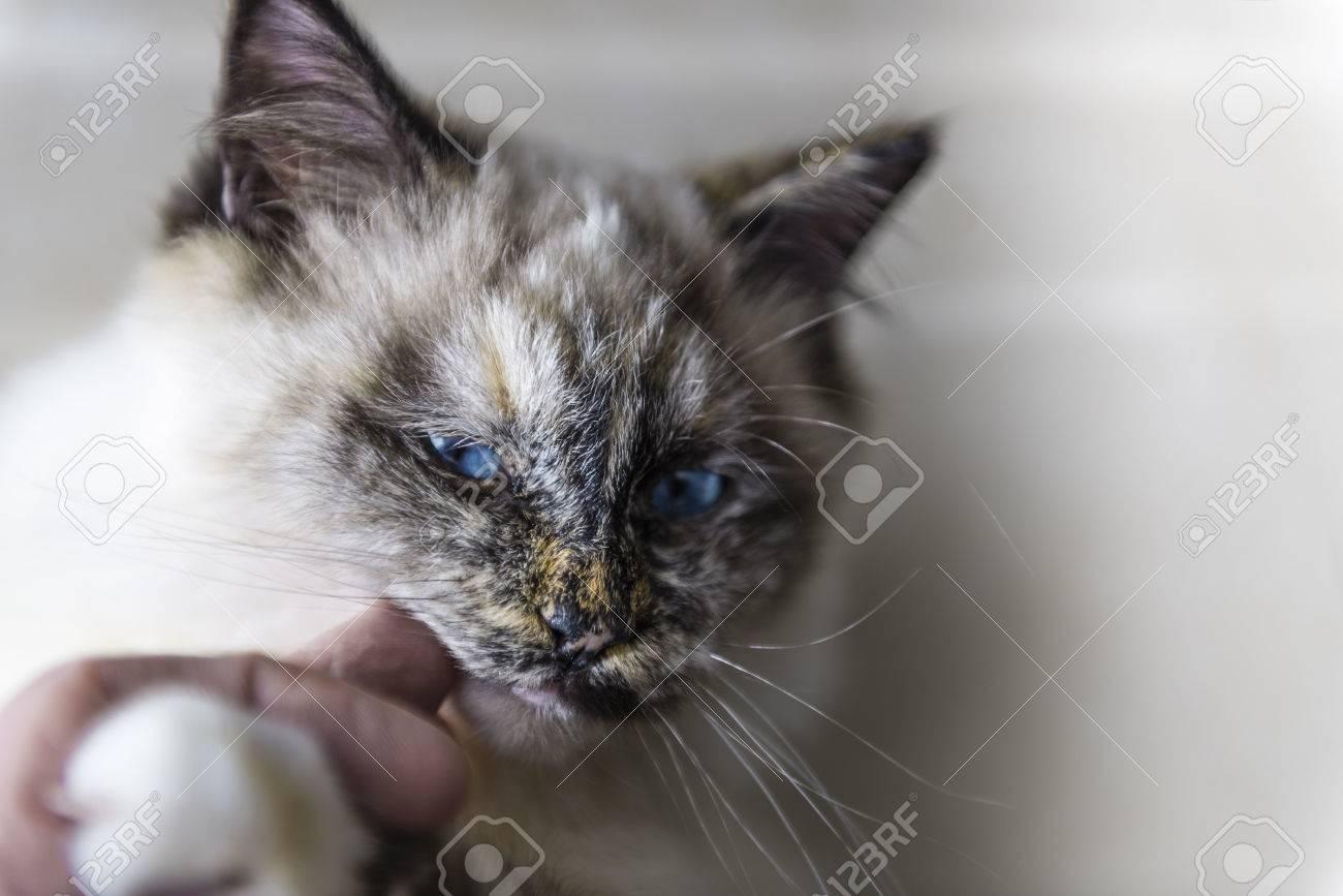 doigt noir chatte