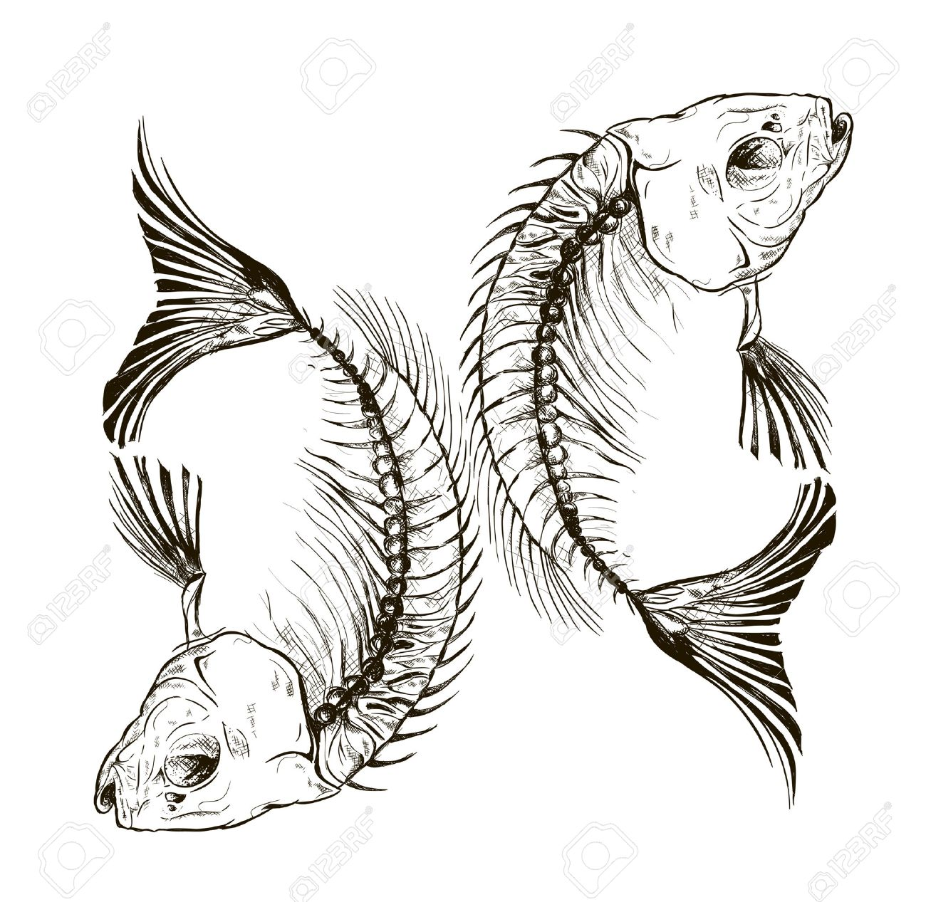 Vector fish skeleton, a talisman, a sign Stock Vector - 43775943