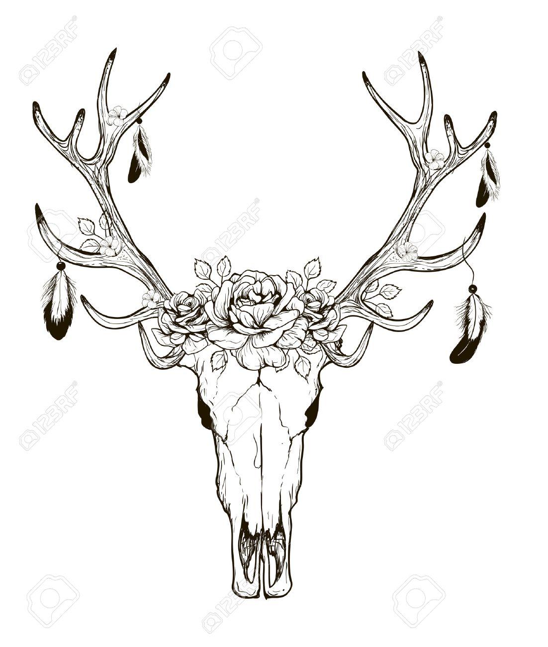 Deer Skull Black White Sketch, Illustrations Drawing Cow Skull ...