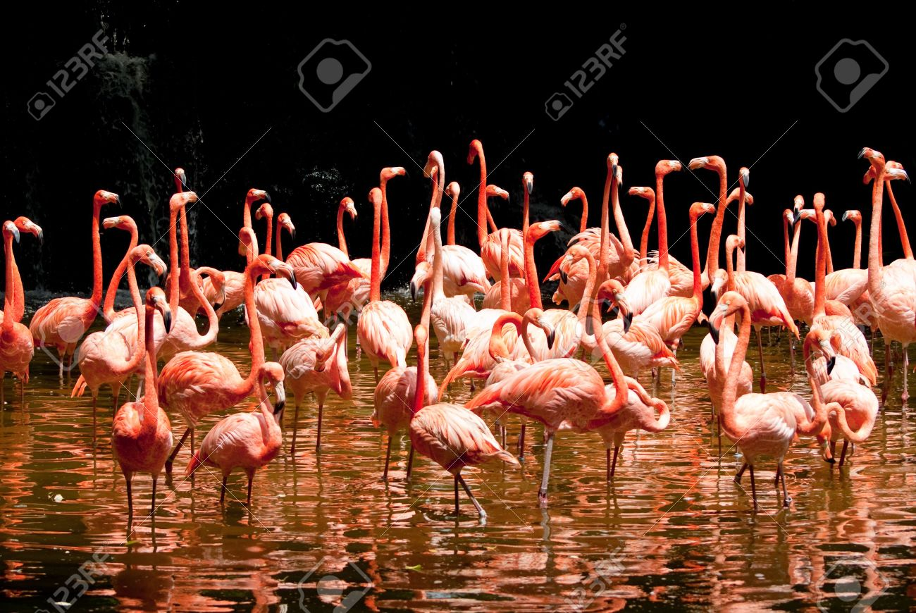 group of red south african flamingo in wild pool - 4793633