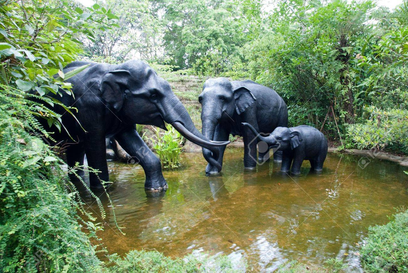 Elephant family play around the small pool - 6009936