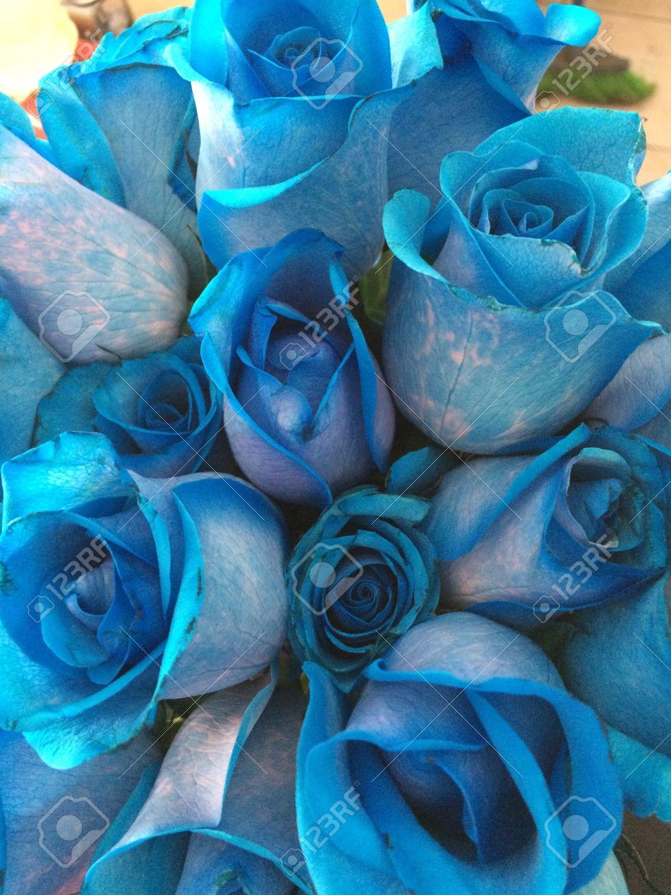 Imagenes De Rosas Azules Hermosas
