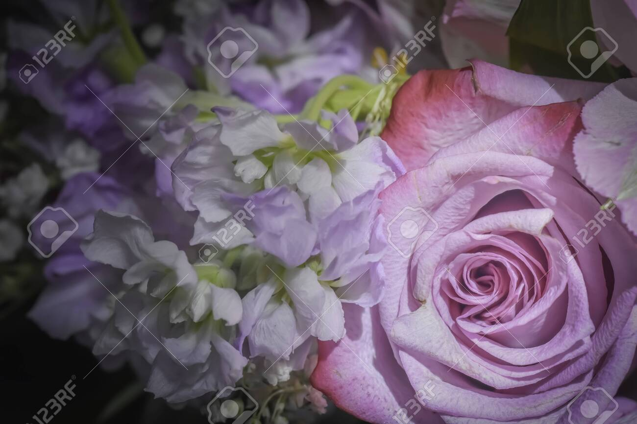 Pink Rose And Purple And White Flower Bouquet Closeup Stock Photo Picture And Royalty Free Image Image 121167173