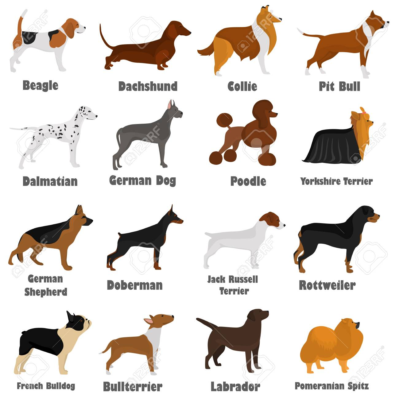 Seth Of Different Breeds Of Dogs Color Flat Icon S For Web And ...