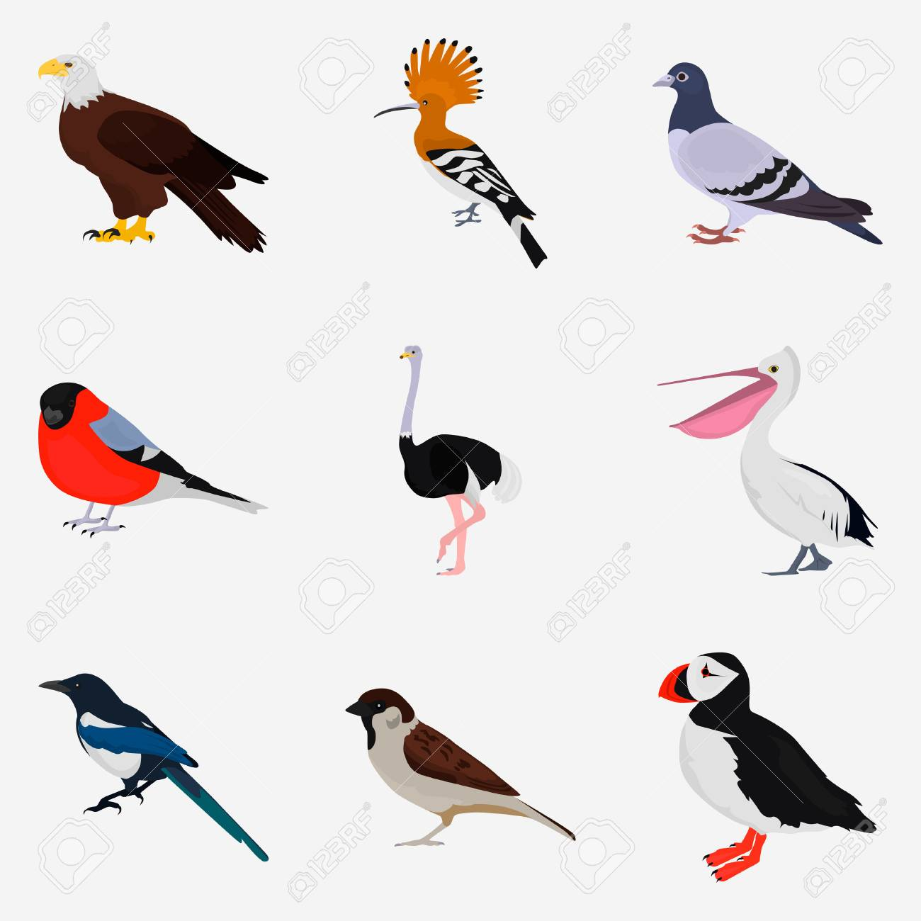 Set Of Different Birds Color Flat Icon For Web And Mobile Design