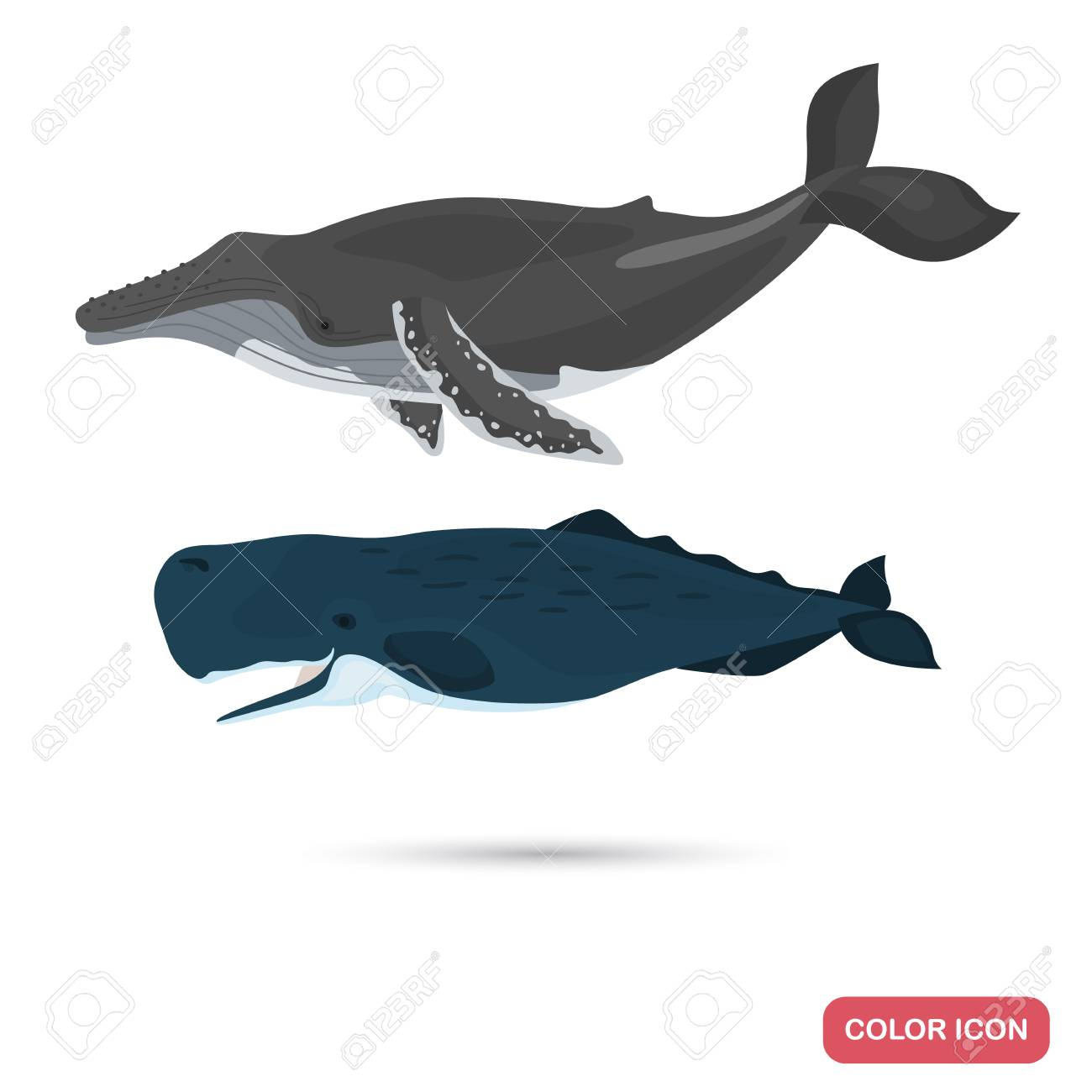 Humpback And Sperm Whales Color Flat Icons Set Royalty Free Cliparts