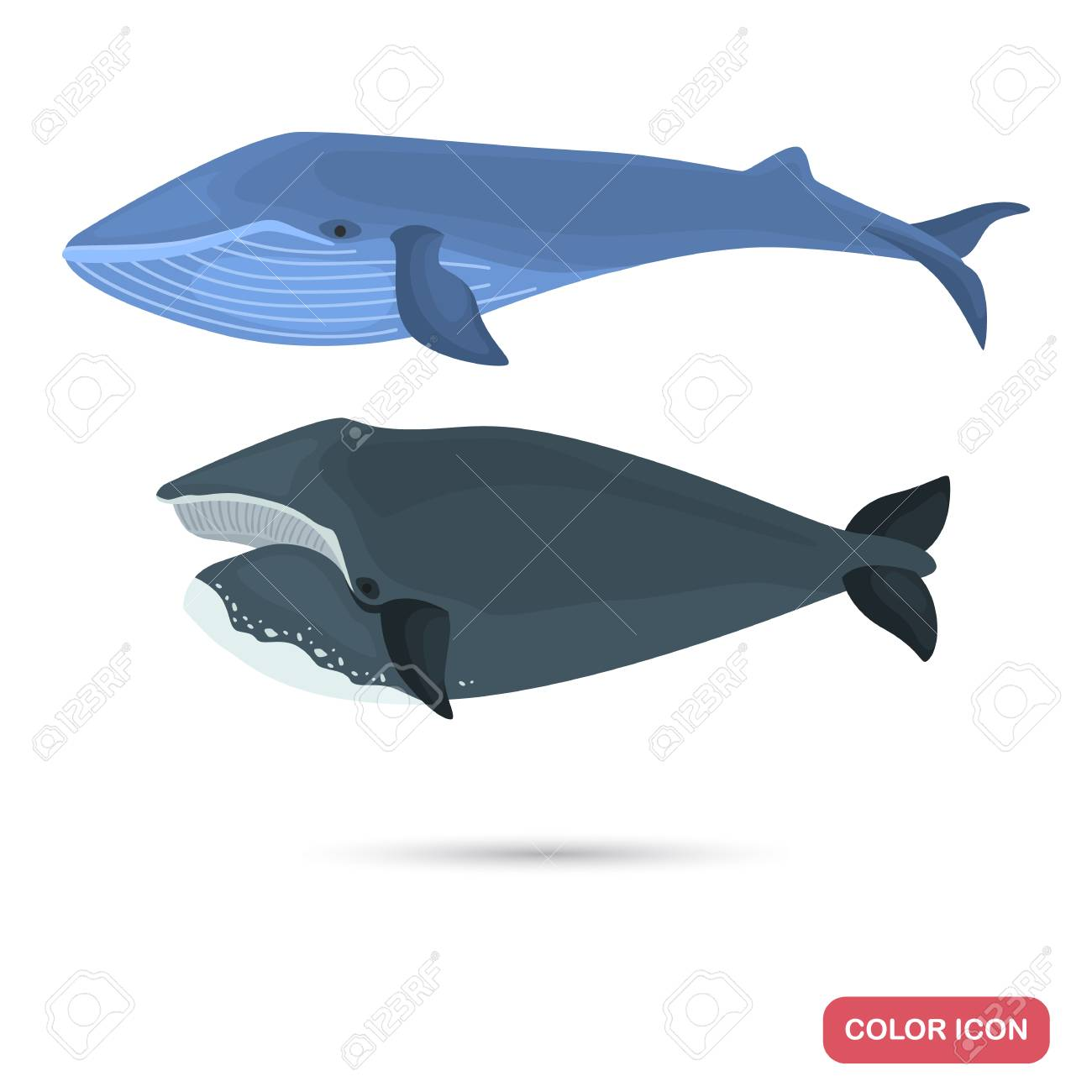 Blue And Greenland Whales Color Flat Icons Set Royalty Free Cliparts