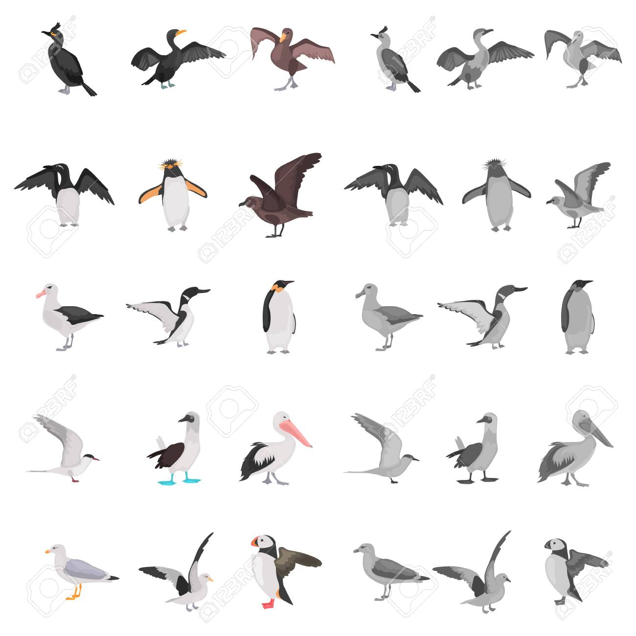 Different Sea Birds Color Flat Black And White Colors Concept