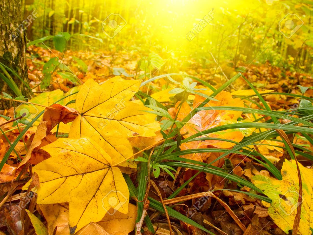 Wonderful golden autumn in the morning forest. Stock Photo - 5756412