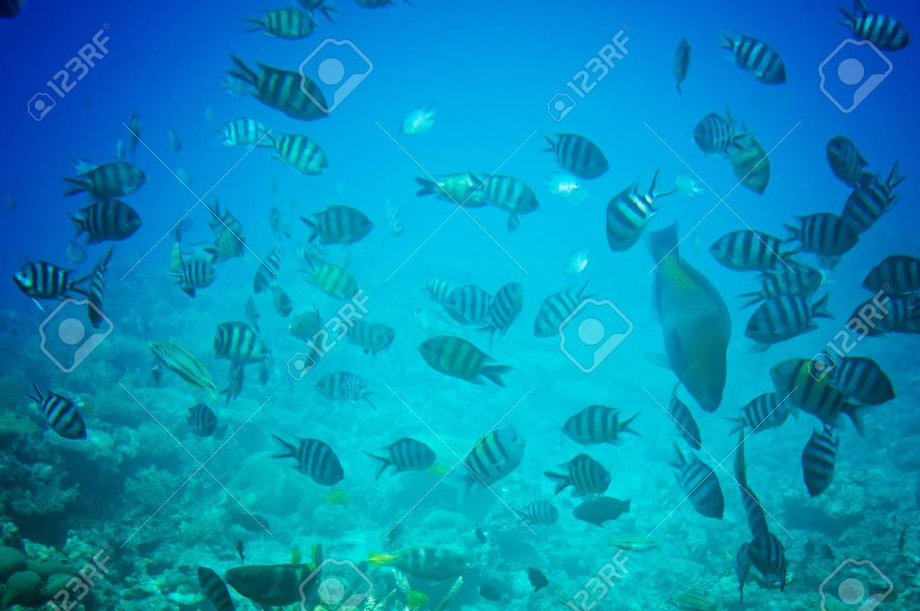 Astonishing undersea world of Red sea. Stock Photo - 7293534