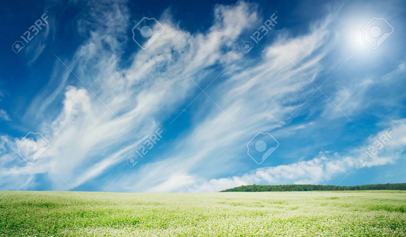 The wonderful field of buckwheat before the rain. Stock Photo - 10045230