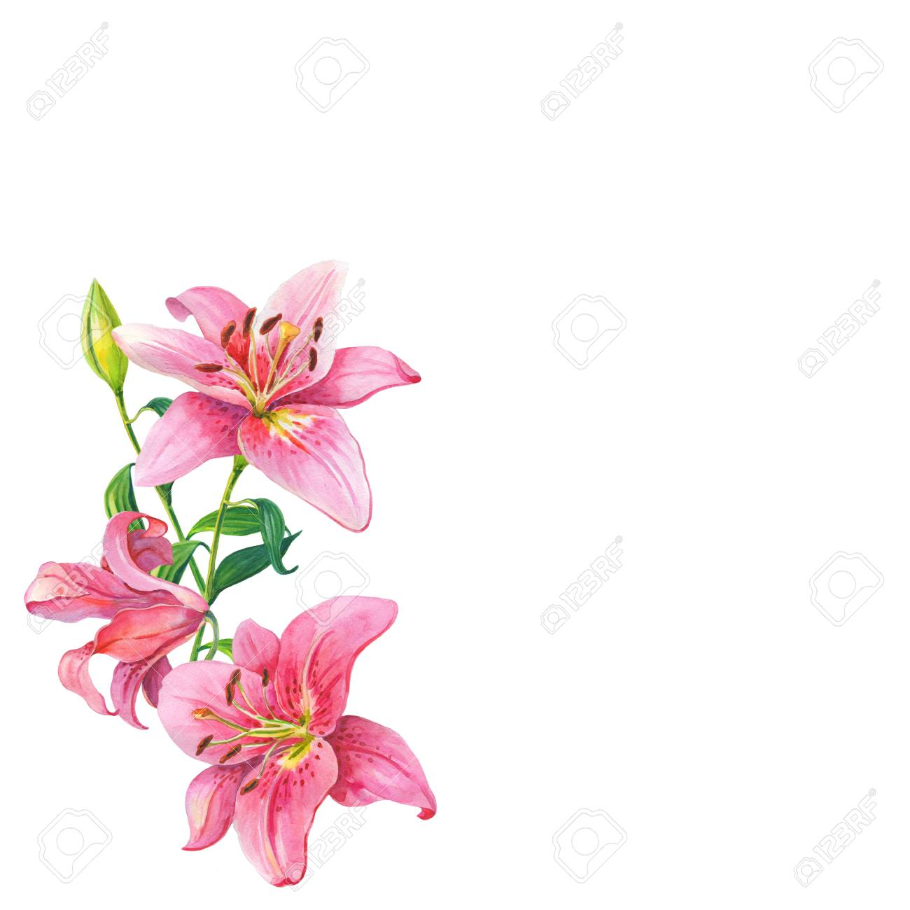 Pink liliesfloral watercolor flowers wreath stock photo picture pink liliesfloral watercolor flowers wreath stock photo 90791481 izmirmasajfo