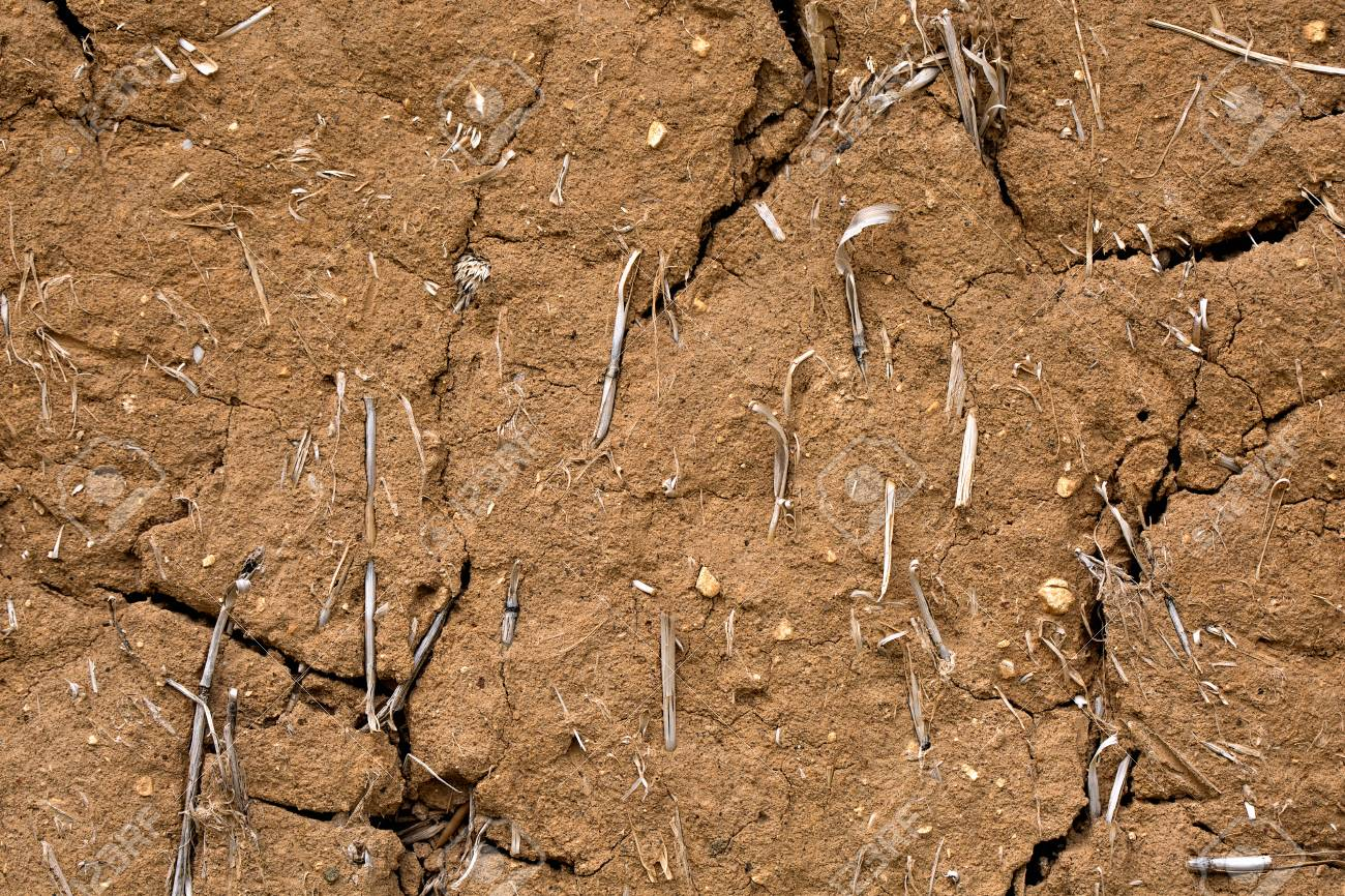 Cracked brown clay wall with dry grass  Texture