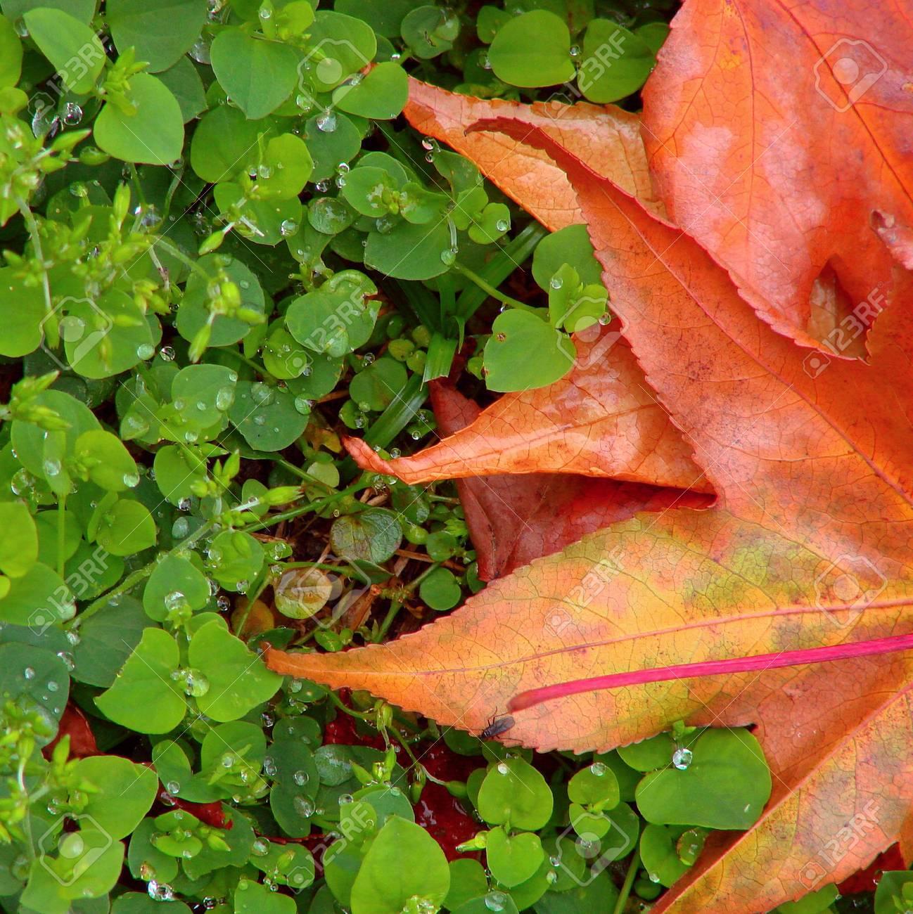 autumn background Stock Photo - 3791598
