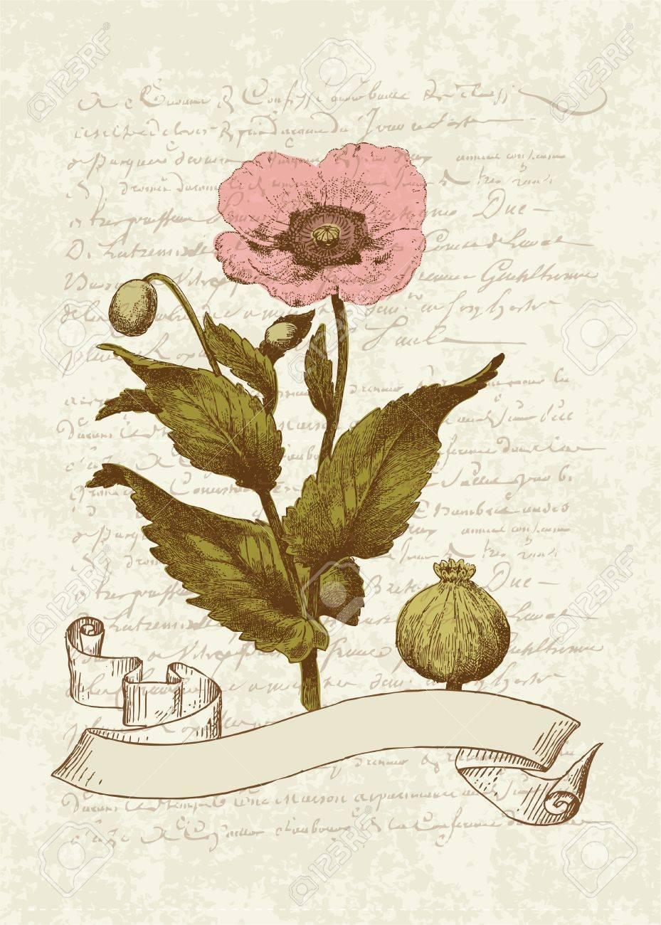 Vintage Karte Mit Poppy Flower For Invitation Grusse Gluckwunsche