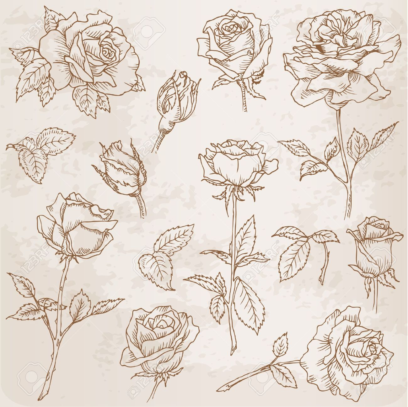 Flower Set: Detailed Hand Drawn Roses In Vector Royalty Free ...