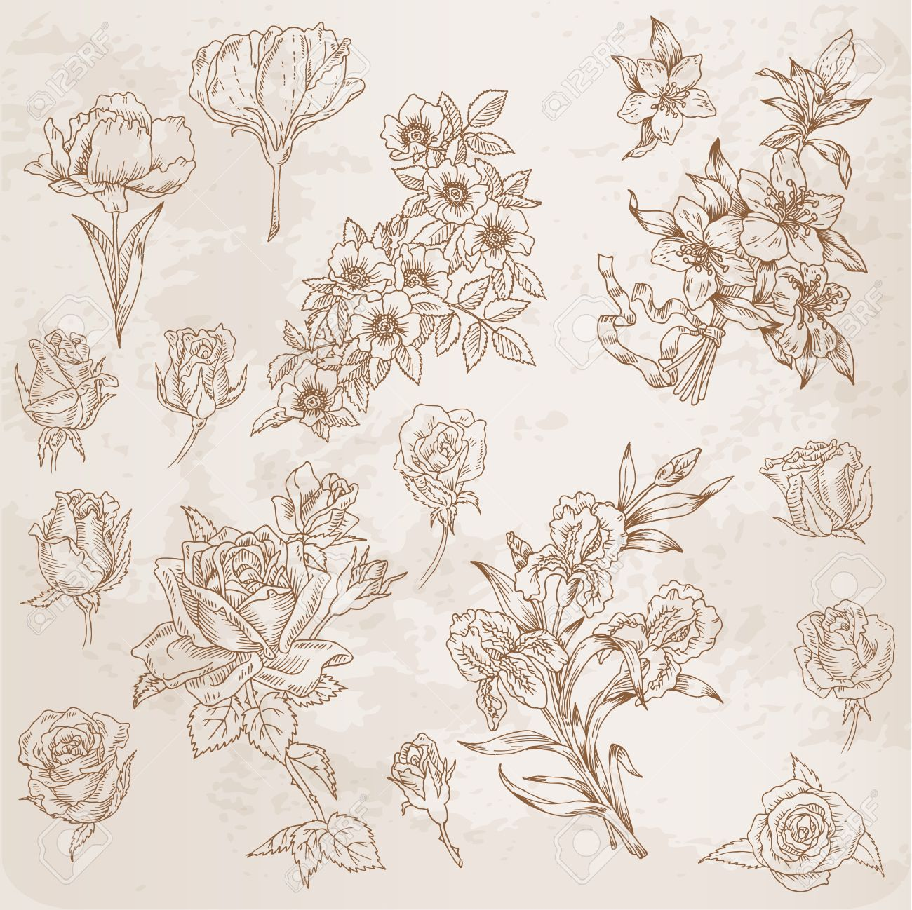 Detailed Hand Drawn Flowers - for scrapbook and design in vector Stock Vector - 13563929