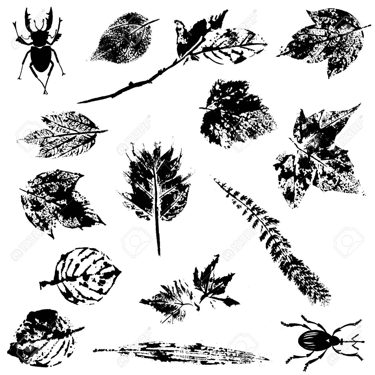 Set of Nature Grunge Elements Stock Vector - 19584485