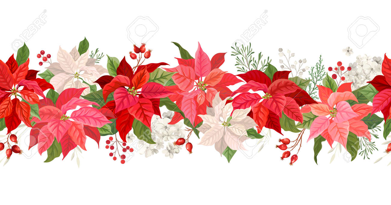 Christmas Poinsettia vector garland border, Watercolor floral winter season frame, holiday seamless background, with rowan berries, pine branch, star flowers, xmas decoration banner - 155289264