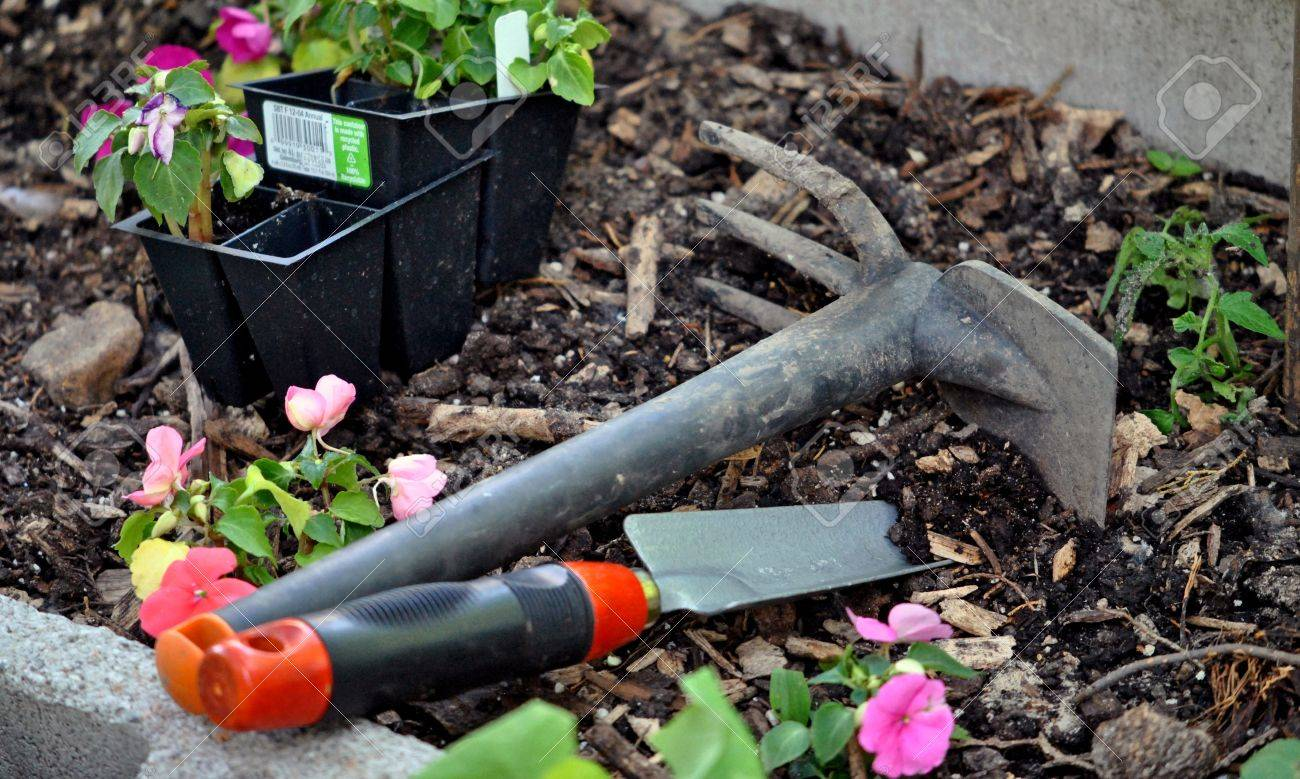 Garden Hand Tools And Small Plants Being Set Out In The Raised