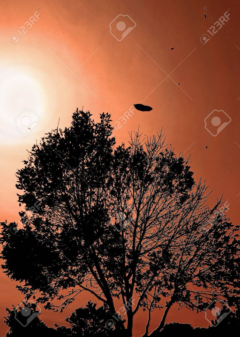 Tree with falling leaves against a spooky orange sky Stock Photo - 15736856