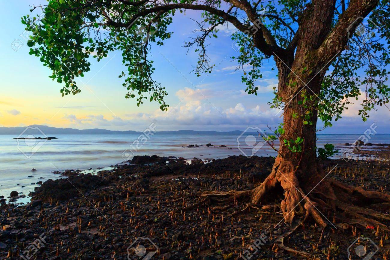 harmonic colors of nature at Borneo, Sabah, Malaysia - 17684756
