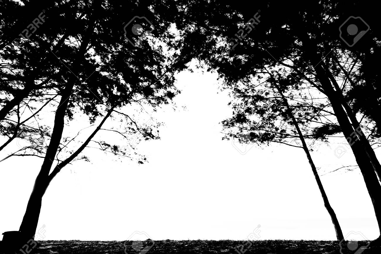 Trees Framing Empty White Space Stock Photo, Picture And Royalty ...
